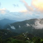 Blue Mountains kavos plantacijose